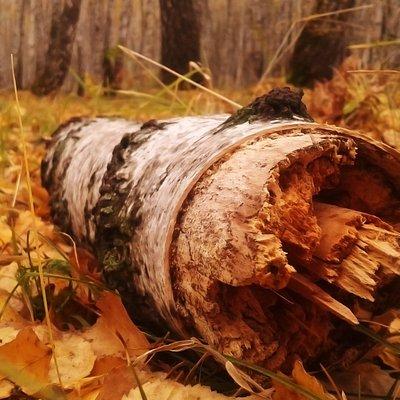 Лес, осень, природа.