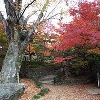 老欅荘への上りの入り口にある大欅。