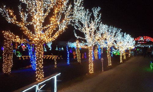 Illuminated trees SalajLand Čazma