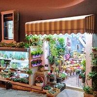Wonderland Flower Shop, Habibi Square, Wadi Nisnas