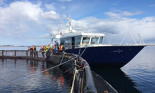 Our boat will drive you right to the sea farming cages. Here you will meet our workers who will tell you everything you need to know about salmon farming.
