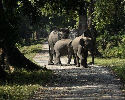 Elephant herd - Taken during jungle safari at Gorumara National Park