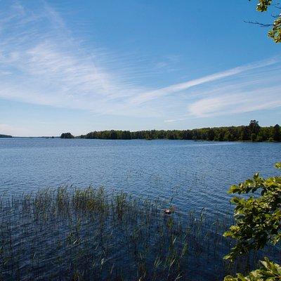 Foto taget i Sunnabron/Bjurkärr i Åsnens Nationalpark
