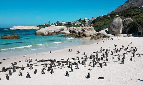 One of the most amazing stops along the Garden Route is Boulders Beach with all the cute little penguins!