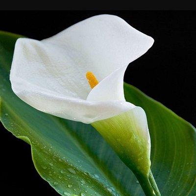 White Lily Spa