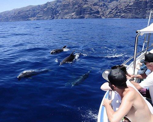 Delfines mulares! Bottlenose dolphins!