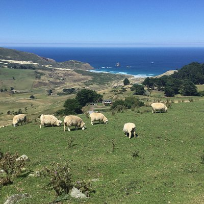On Otago Peninsula