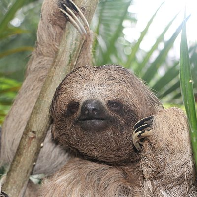 sloth time!