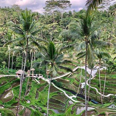 Saira Bali Tour