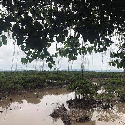 Nhìn ra rừng ngập mặn Tiên Yên từ quán bán trứng vịt biển ngay bên cạnh Quốc lộ 18.