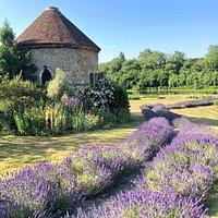 Allington Castle - Lavender Walk