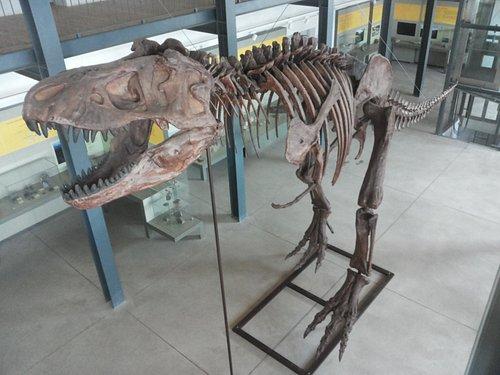 Riproduzione del T-Rex