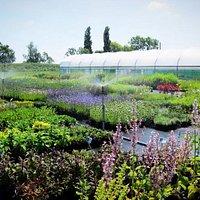 Jekka's Herb Farm, we grow over 400 varieties of Herb