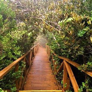 Sendero desde donde se logra apreciar la vegetación única de la región. Path from where you can appreciate the vegetation and the different  species of the region.