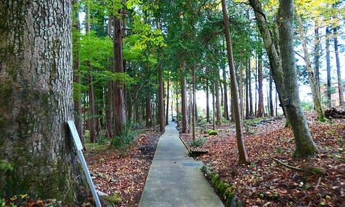 裏参道は表参道と並行していて、入口の鳥居のある所に向かいます。森林の雰囲気が素晴らしいです。