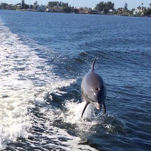 Fun Dolphin Facts. Did you know dolphins are carnivores. Fish, squid and crustaceans are included in their list of prey. A 260-pound dolphin eats about 33 pounds of fish a day.