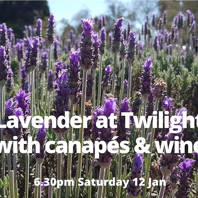 Join us at this exclusive event - enjoy canapes made by our chef, Yarra Valley wines, live music, and a talk from the owner about the lavender growing and drying process, as you wander the rows of lavender at twlight.  Tickets available on our website www.warratinalavender.com.au