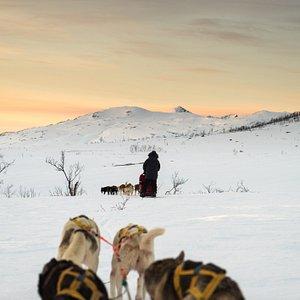 One Day Of Active Dog Sledding