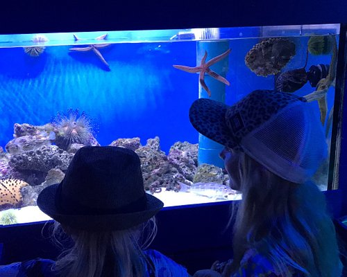 Excelente actividad para conocer más sobre el mar peruano. Un acuario apto para todas las edades e interactivo.
