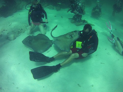 Amazing dive at Stingray City, Grand Cayman