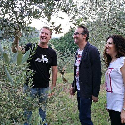A walk through the Tananei olive grove