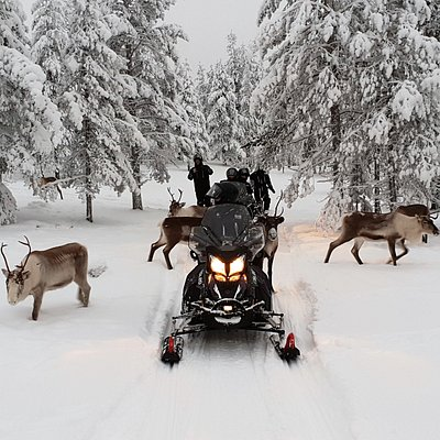 Reindeer on our private route