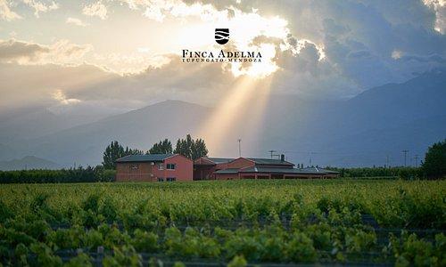 Finca Adelma eligió el Valle de Tupungato, en la provincia de Mendoza como su Genius Loci, ese carácter protectivo que tiene cada lugar, para conseguir las mejores uvas de este Gran Malbec Argentino.