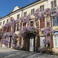 La façade de la maison est recouverte d'une glycine centenaire florissant en avril