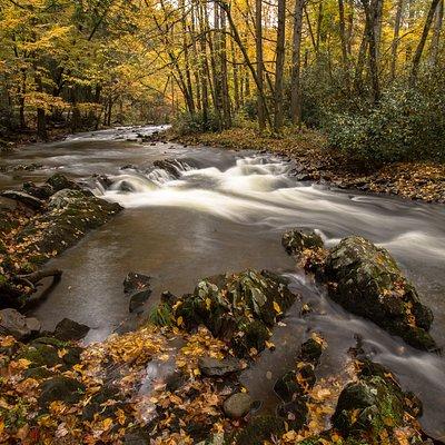 Fall colors along Little River Road