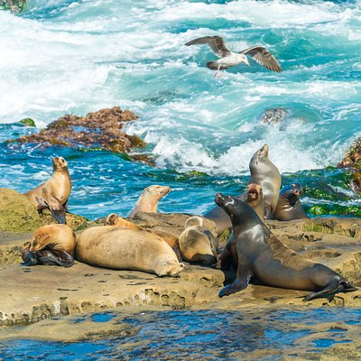 Sea lions doing their thing at La Jolla Cove. Shot with a zoom lens as it's important for people to enjoy them at a distance.
