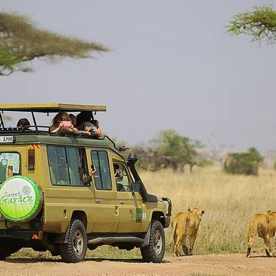Nyange Adventures Safari Lions