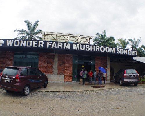 Wonder Farm Mushroom