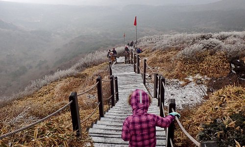 This is a pleasant trail (but does not summit Mt Hallasan) in Jeju and is perfect for beginners but you would need to be in ok shape to climb the whole way  If driving don't park at the first ticket gantry but drive further in another 2.4km and there is a bigger parking area at the real start to the trail where you can buy crampons