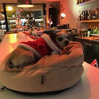 Lily helps out at the bar.