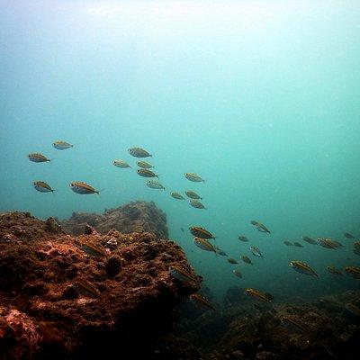 Scuba Diving in Grand Island, Goa