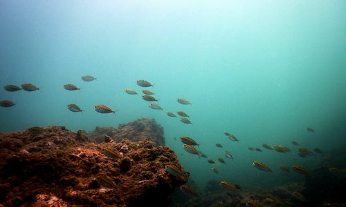 Scuba Diving in Grand Island, Goa