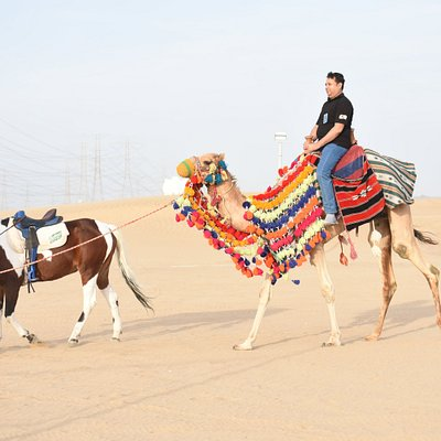 Experience the Arabian Camel and horse
