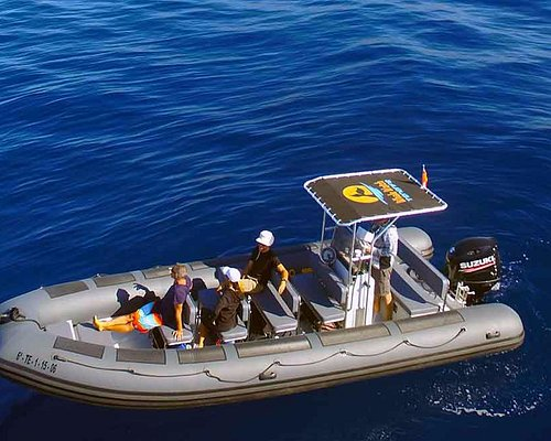 Our 8 meter custom built whale watching boat named 'Globy' for guests of all ages.