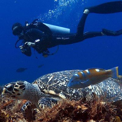 Diver, Cozumel, Mx
