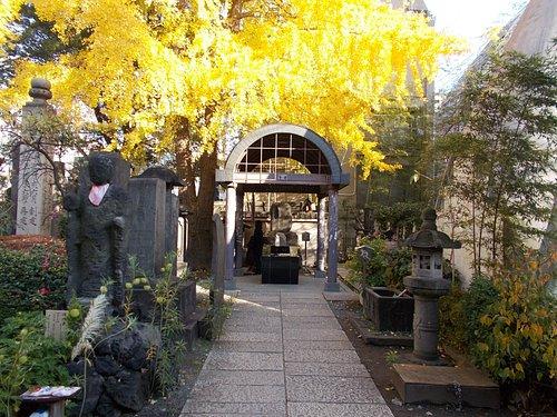 鼠小僧の墓と銀杏