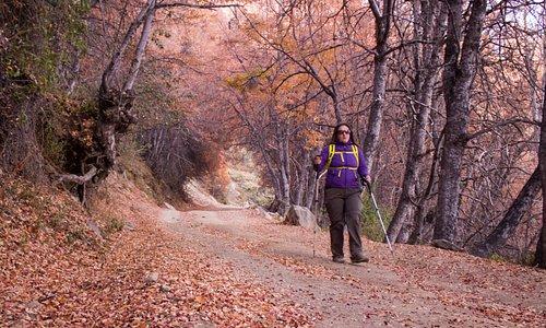 #rutaalrobledal, si deseas caminar en colores debes visitar esta montaña durante el otoño