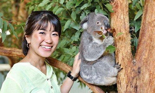 Everyone loves our Koalas