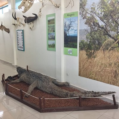 crocodilr
