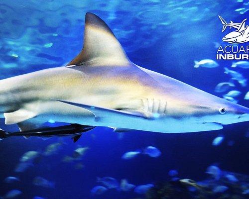 ¡Conoce a más de 14,000 ejemplares de 350 especies!