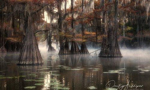 Кипарисовые болота Луизианы и Техаса. Невероятное по красоте и настроению место. Здесь пока еще не так много туристов, и можно насладиться красотой и спокойствием.