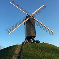 Windmills of Bruges (3)