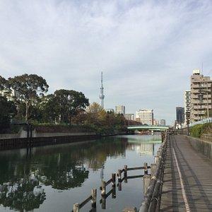 横十間川・水辺の散歩道