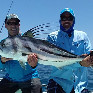 roosterfish on light tackle