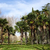 Palm trees in the park.  Lovely setting for the Temple de Debod.