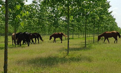 Passeggiate a cavallo, pensione completa per cavalli, lezioni ed eventi.